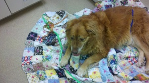 rescue a golden of arizona