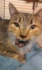 Tucson CARES saves cat